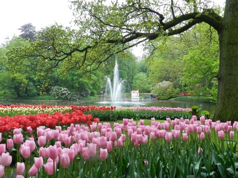Keukenhof Park & Fountain, The Netherlands