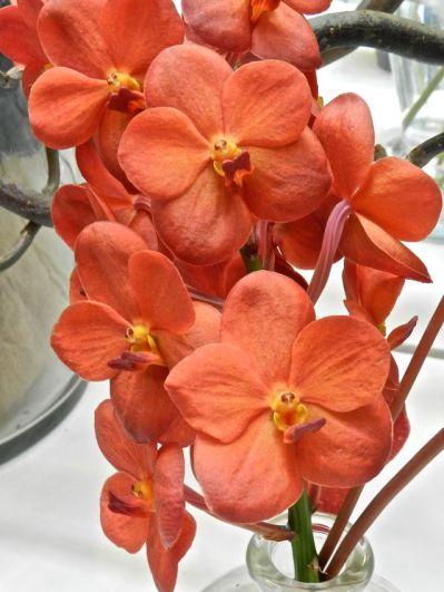 Orange Orchids, Keukenhof Park, The Netherlands