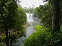 Dangar Falls, Dorrigo NP