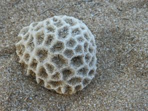 Washed up Coral, NT