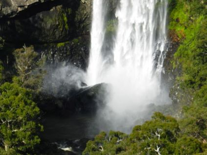 Waterfall 1, Dorrigo NP