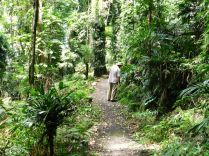 Wonga Walk 1, Dorrigo NP, Waterfall Way