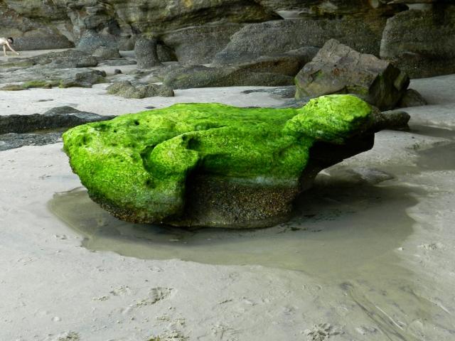 Mossy Rock 1