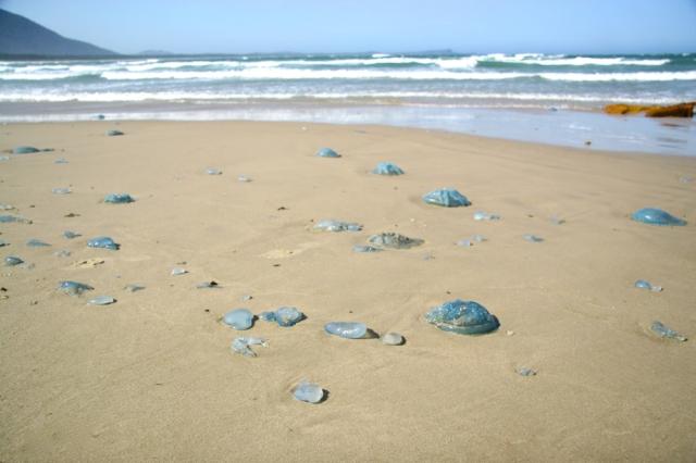 Hundreds washed ashore