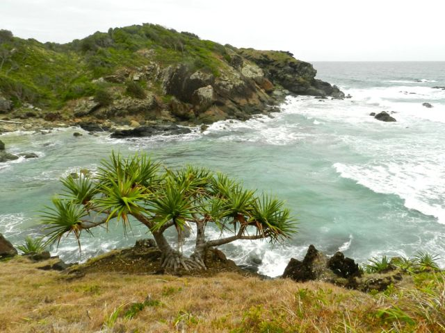 Sea Acres NP, Port Macquarie