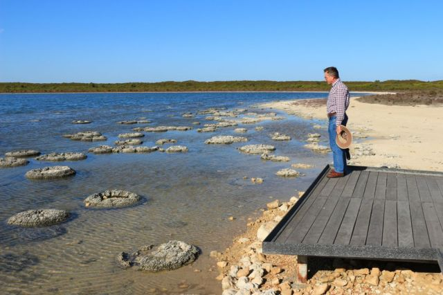 Stromatolites at Lake Thetis, Nambung NP