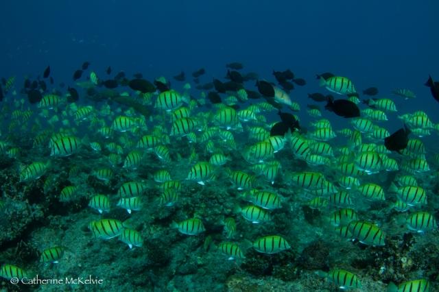 Reef marine life
