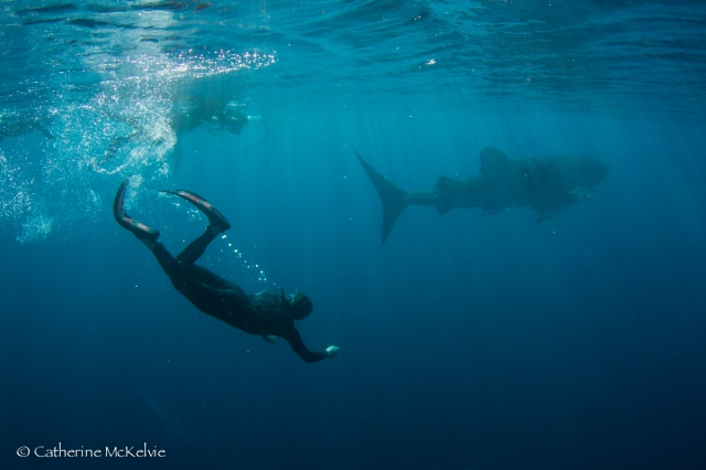 Whale Shark Tour (86 of 92) July 2015