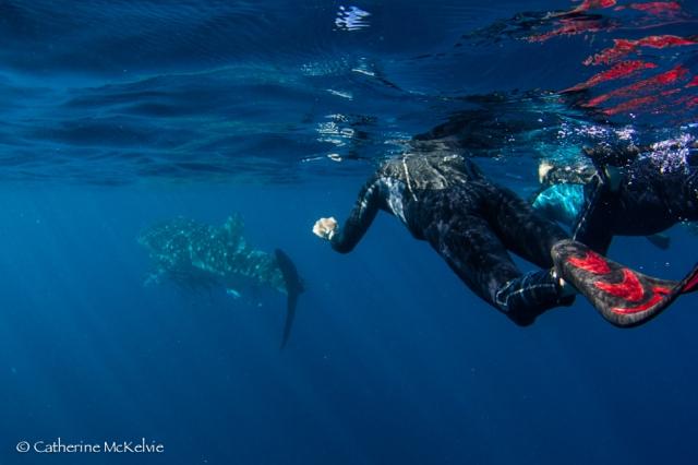 Whale Shark Tour, Ningaloo Reef, WA (2 of 7)