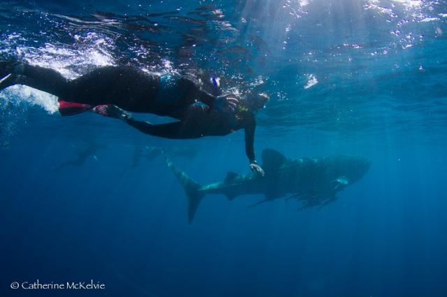 Whale Shark Tour, Ningaloo Reef, WA (3 of 7)