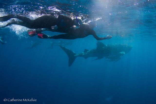 Whale Shark Tour, Ningaloo Reef, WA (4 of 7)