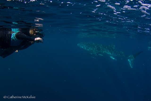 Whale Shark Tour, Ningaloo Reef, WA (7 of 7)