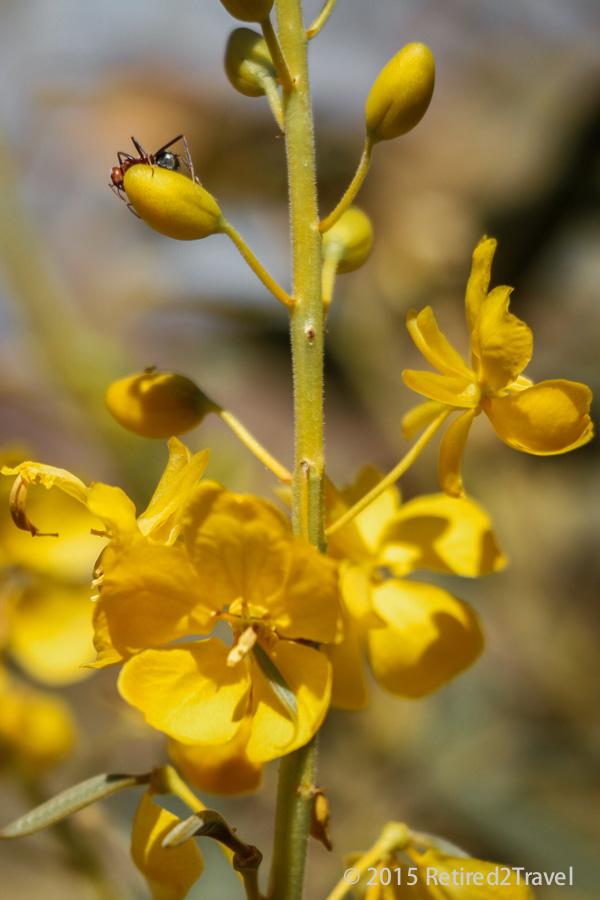 Wildflower & Ant - Purnululu National Park