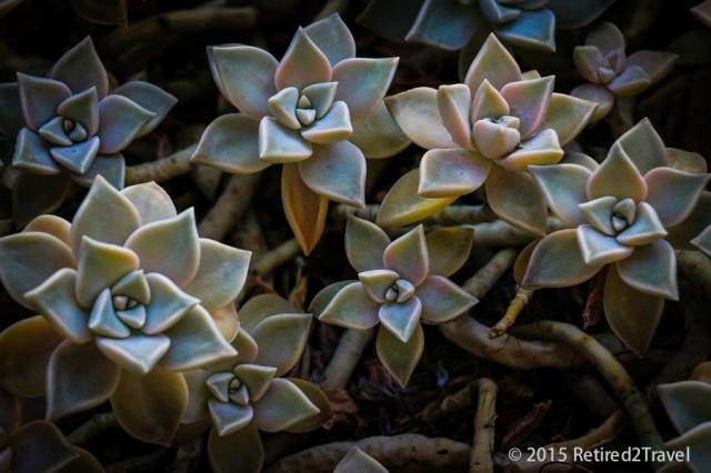 Brisbane Botanic Garden, QLD 3 Oct 2015, (4 of 36) October 201503